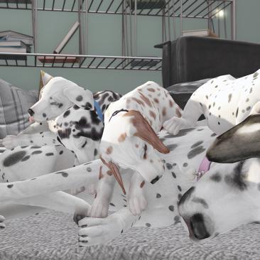 doggon tired_004